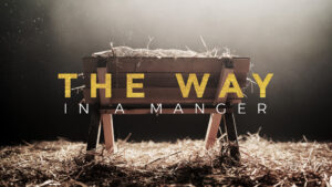 The Way in a Manger Week 3: Lasting Peace